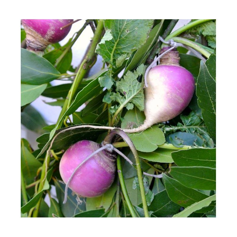 Brovada - Ingrosso Frutta e Verdura